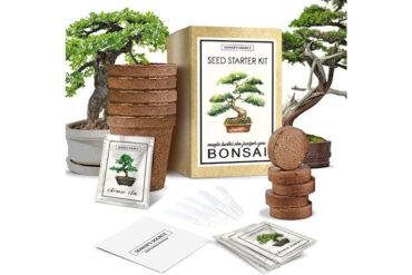 Bonsai_Tree_Starter_Kit