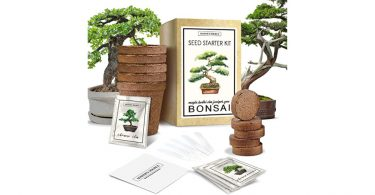 Bonsai_Tree_Starter_Kit