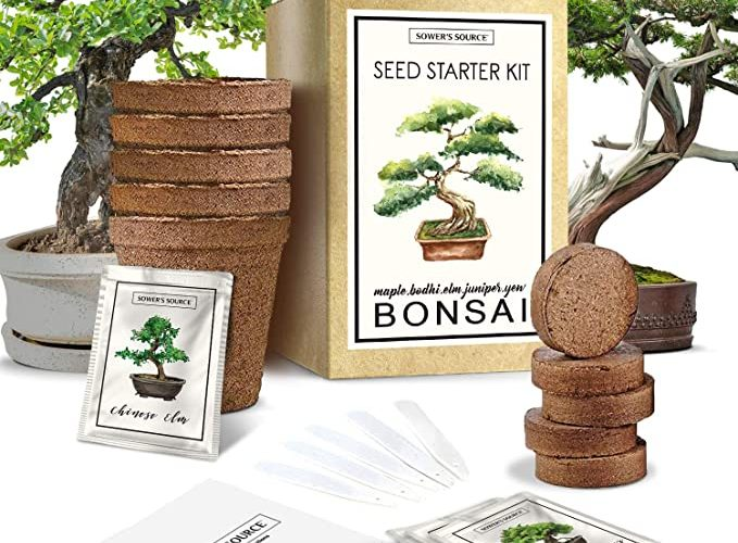 bonsai_starter_kit